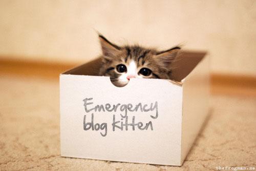 blogkitten